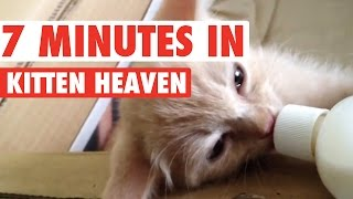 Download 7 Minutes in Kitten Heaven Video Compilation 2016 Video