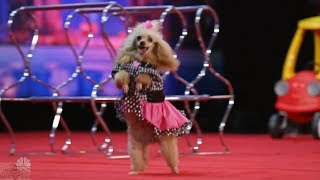 Download America's Got Talent 2017 The Adorable Pomeyo Dogs Family Full Audition S12E03 Video