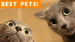 Download Best Animal Videos of 2018 (so far) | Funny Pet Videos Video