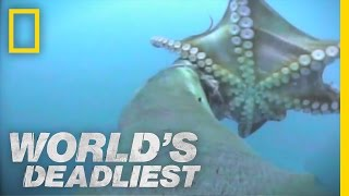 Download Sea Lion vs. Octopus | World's Deadliest Video
