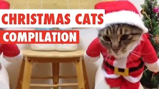 Download Christmas Cats Video Compilation 2016 Video
