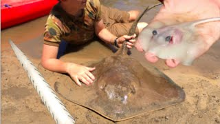Download RARE FOOTAGE: Stingray Giving Birth, Boy Delivers 12 Stingrays! HD Video