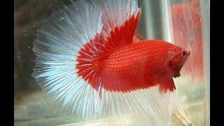 Download Most Beautiful and Popular Aquarium Fishes Video
