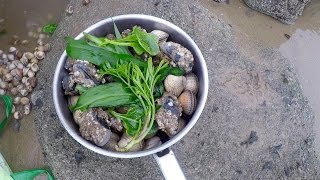 Download Coastal foraging with Craig Evans (razor fish, clams and wild greens) Video