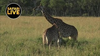 Download safariLIVE Video