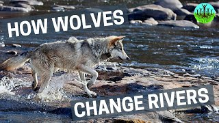 Download How Wolves Change Rivers Video