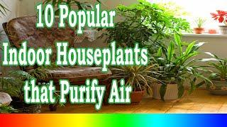 Download Best Indoor Plants - 10 Popular Indoor Houseplants that Purify Air Video