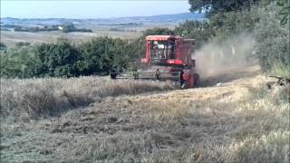 Download Trebbiatura orzo Laverda Al Rey Video