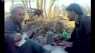 Download Rabab Mange Best Ghazal Da Nasha Nasha Starge Video