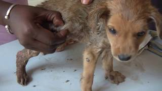 Download 6 weeks old puppy, 125.000 Mangoworms, roundabout Video