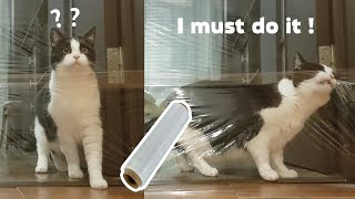 Download My Cat's Reaction To The Invisible Challenge Video