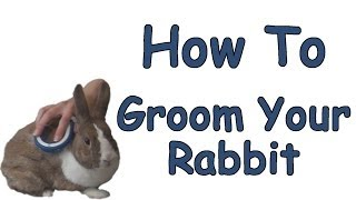 Download How To Groom Your Rabbit Video