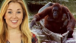Download Top 10 Smart Animals | Earth Unplugged Video