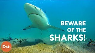 Download 10 Most Dangerous Beaches for Deadly Shark Attacks Video