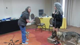 Download Service dog practice bad encounter Video