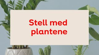 Download Stell med plantene Video