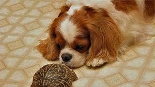 Download Turtles chasing cats and dogs – Funny pets compilation Video