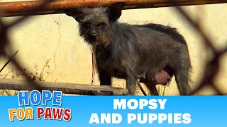 Download Dog gives birth near electric power lines - it took us 6 hours to save them! Video