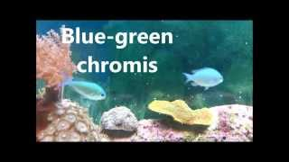 Download 10 easy to keep marine fish. Video