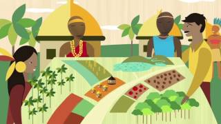 Download FAO, Indigenous Peoples and the Free, Prior and Informed Consent (FPIC) Video