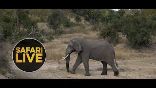 Download safariLIVE - Sunrise Safari - May 12, 2018 Video