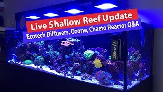 Download Live Shallow Reef Tank Update - Ozone, Ecotech Diffusers, Chaeto Reactor and Q&A Video