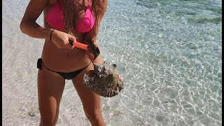 Download HOW TO CATCH, CLEAN & COOK LOBSTER and CONCH in the BAHAMAS! Video