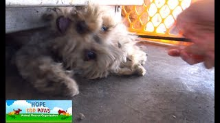 Download Tiny Yorkie almost gets crushed by propane tanks! NEW Hope For Paws rescue video! Video