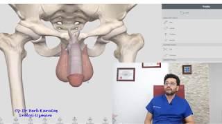 Download Penis büyütme ve kalınlaştırma yöntemleri Video