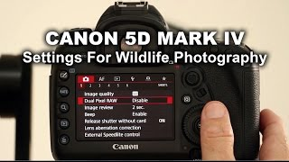 Download Canon 5D Mark IV - Settings For Wildlife Photography Video