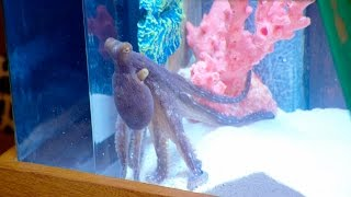 Download Erika Girardi's Octopus Tank Video