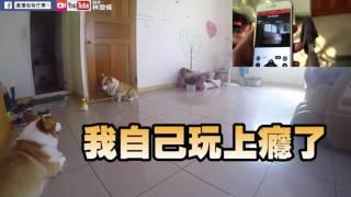 Download [連環泡]兩寶的新保母-Shinbobo機器人 Video