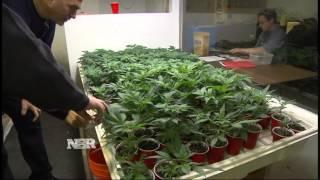 Download Marijuana real estate Video