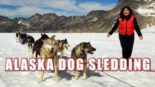 Download Alaska Dog Sledding On Top Of A Glacier Video
