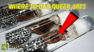 Download Where to Buy Queen Ants | Getting Started in Ant Keeping 101 Video