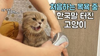 Download 태어나서 처음하는 목욕 중 한국말 터진 고양이 이즈 Video