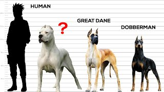 Download Strongest Dogs in the World Video