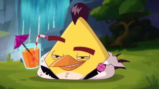 Download Angry Birds Cartoon Series Season 2 | angry birds toon Video