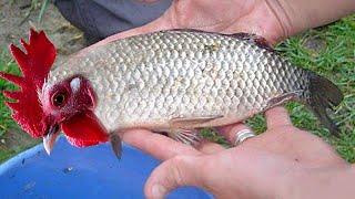 Download Top 10 Amazing Viral Videos 2017 Fishing Boats, Salmon Traditional Net Fishing Tuna Herring Mackerel Video
