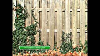 Download How to Reduce Noises in Your Outdoor Living Spaces Video
