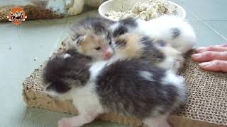 Download 酒酒多多果園失蹤記+果園的貓咪家族 Video