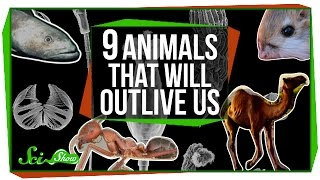 Download 9 Animals That Will Outlive Us Video