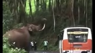 Download Munnar Wild Elephant attack [Padayappa Elephant] Video