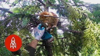Download Rescuing Cats From Super Tall Trees Video