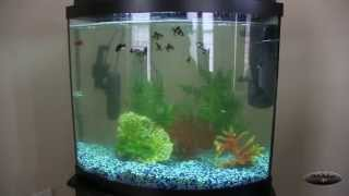Download Green Killing Machine Day by Day Progress - Aqueon 26 gallon bow front tank Video
