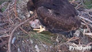 Download SWFL Eagles ~ How to Unzip it; Tug-O-Fish with Mom 2.19.17 Video