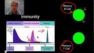 Download The Immune System Video