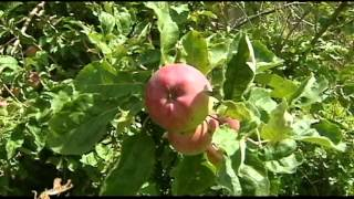 Download Travel to the apple country - part 1 Video