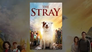 Download The Stray Video