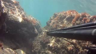 Download zıpkın avında güzel bir gün iskenderun arsuz Video